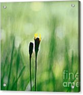 Le Centre De L Attention - Green S0101 Acrylic Print by Variance Collections