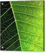 Leaf Texture Acrylic Print by Carlos Caetano