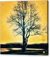 Leafless Tree Acrylic Print by Jutta Maria Pusl