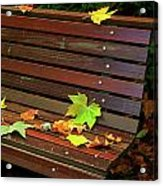 Leafs In Bench Acrylic Print by Carlos Caetano