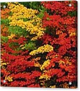 Leaves On Trees Changing Colour Acrylic Print by Mike Grandmailson