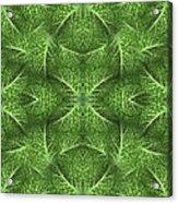 Lettuce Live Green  Acrylic Print by Sue Duda
