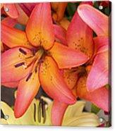 Lilies Background Acrylic Print by Jane Rix