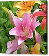 Lilies (lilium Sp.) Acrylic Print by Tony Craddock