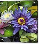 Lilies No. 16 Acrylic Print by Anne Klar