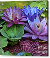 Lilies No. 27 Acrylic Print by Anne Klar