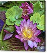 Lilies No. 28 Acrylic Print by Anne Klar
