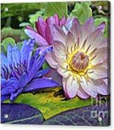 Lilies No. 30 Acrylic Print by Anne Klar
