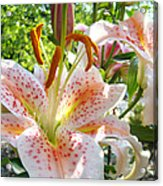 Lily Flowers Floral Prints Photography Orange Lilies Acrylic Print by Baslee Troutman