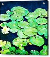 Lily Pads And Lotus Acrylic Print by Tammy Wetzel