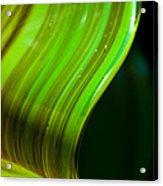 Lime Curl Acrylic Print by Dana Kern