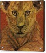Lion Cub Acrylic Print by Christy Saunders Church
