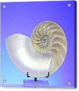 Logarithmic Spiral Acrylic Print by Photo Researchers, Inc.