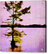 Lone Cypress Acrylic Print by Judi Bagwell