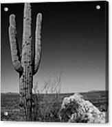 Lone Saguaro Acrylic Print by Chad Dutson