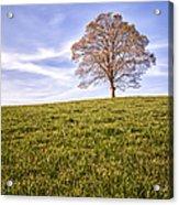 Lone Tree On The Hill Colour Acrylic Print by John Farnan