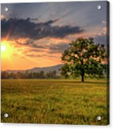 Lonely Tree In Field Acrylic Print by Malcolm MacGregor