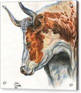 Longhorn Acrylic Print by Jana Goode