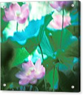 Lotus--ethereal Impressions II 20a1 Acrylic Print by Gerry Gantt