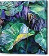 Lotus Pond Acrylic Print by Carol Mangano