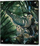 Love A Dove Dove Acrylic Print by Chris Lord