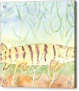 Lurking Tiger Acrylic Print by David Crowell