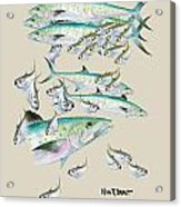 Mackerel Montage Acrylic Print by Kevin Brant