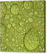 Macro Image Of A Magnolia Leaf Acrylic Print by Laszlo Podor Photography