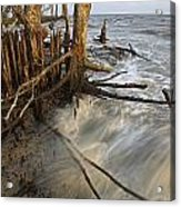 Mangrove Trees Protect The Coast Acrylic Print by Tim Laman