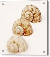 Marine Snails Acrylic Print by Joana Kruse