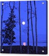 May Moon Through Birches Acrylic Print by Francine Frank