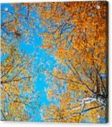 Meet In Heaven. Autumn Glory Acrylic Print by Jenny Rainbow