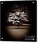 Memoir 1 Acrylic Print by Luke Moore