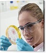 Microbiological Research Acrylic Print by Tek Image
