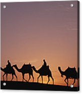 Modern Egyptians Riding Domesticated Acrylic Print by Gerry Ellis
