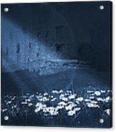 Moon Light Daisies Acrylic Print by Svetlana Sewell