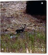 Moonlit Buck Acrylic Print by The Kepharts