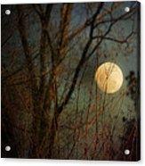 Moonrise Acrylic Print by Jai Johnson