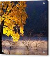 Morning Maple Ll Acrylic Print by Rob Travis