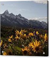 Mountain Flowers Acrylic Print by Charles Warren