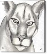 Mountain Lion Acrylic Print by Rick Hill