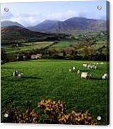 Mourne Mountains From Trassey Road, Co Acrylic Print by The Irish Image Collection