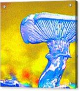 Mushroom Whimsy  Acrylic Print by Marie Jamieson