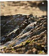 Mussels Sunset Acrylic Print by Henrik Lehnerer