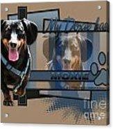 My Doxie Has Moxie - Dachshund Acrylic Print by Renae Laughner