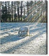My Lovely Horse Acrylic Print by Anthony Beyga