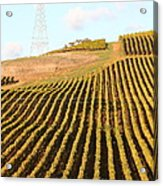 Napa Valley Vineyard . 7d9065 Acrylic Print by Wingsdomain Art and Photography