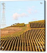 Napa Valley Vineyard . 7d9066 Acrylic Print by Wingsdomain Art and Photography
