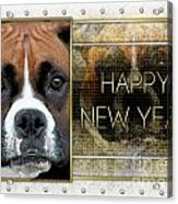 New Year - Golden Elegance Boxer Acrylic Print by Renae Laughner