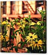 New York City Flowers Along The High Line Park Acrylic Print by Vivienne Gucwa